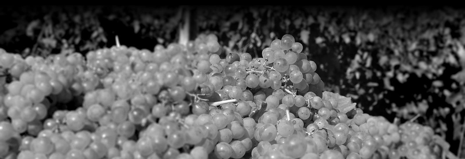 Produzione vini Cantina Barone