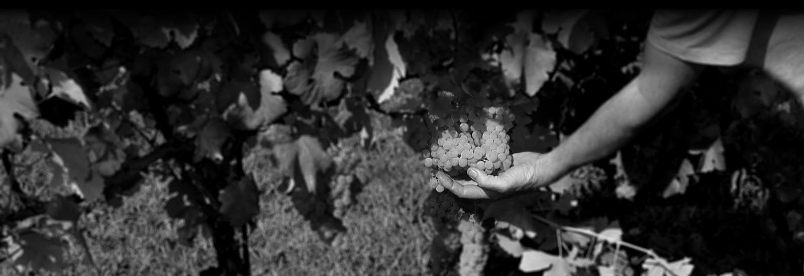 Produzione vini a Castel San Pietro Terme